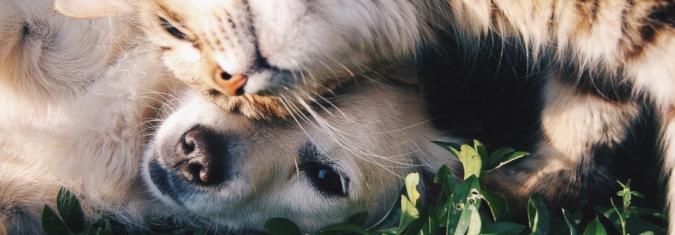 Vai tiešām suņu un kaķu īpašnieki ir tik atšķirīgi